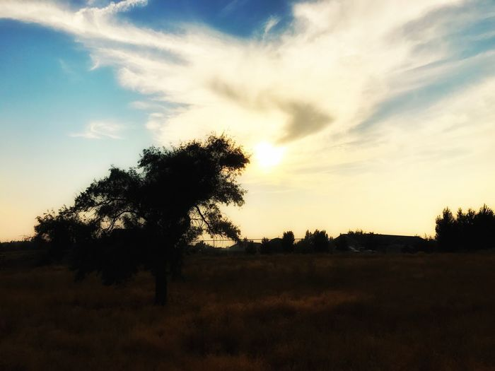 Tree Sunset Nature Beauty In Nature Tranquil Scene Sky Tranquility Scenics Landscape Silhouette Growth Field No People Outdoors Cloud - Sky Grass Day Snapseed