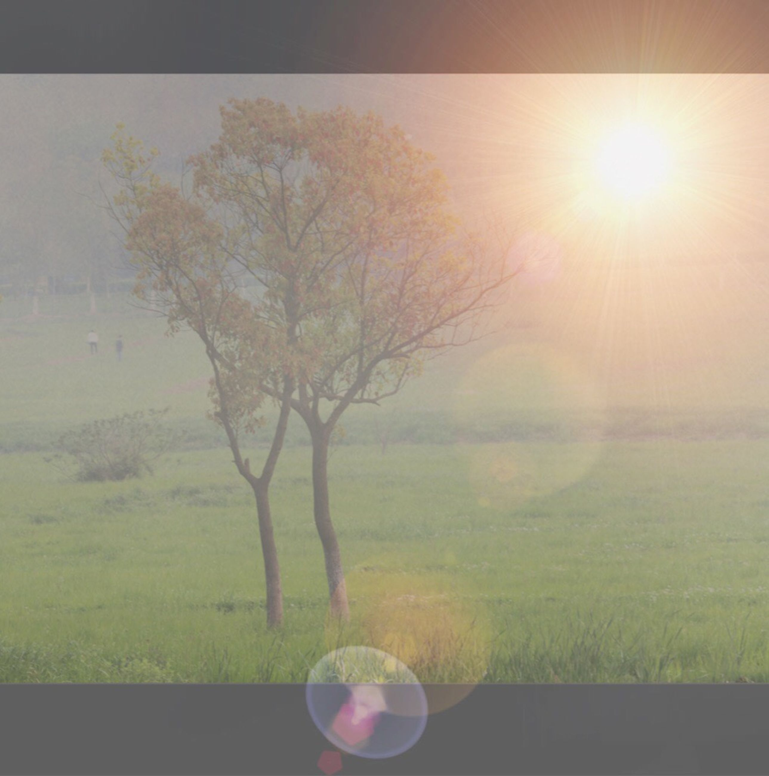 sun, sunbeam, lens flare, sunlight, tree, grass, field, nature, tranquility, beauty in nature, growth, landscape, tranquil scene, sky, bright, scenics, day, no people, plant, sunny