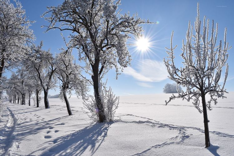 Perfect Cold Temperature Winter Beauty In Nature Sun Tree Relaxing Germany Taking Photos Wintertime Oberlungwitz Hirschgrund Enjoying The Sun Enjoying Life Outdoors Frost Landscape Walking Around Exploring Nature