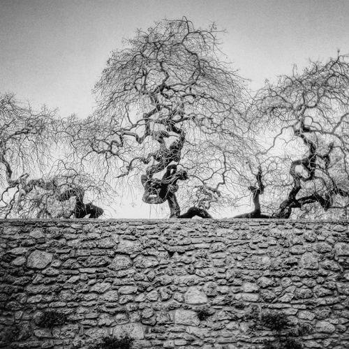 ALBERI Wall Muro  Alberi Umbria, Italy Nature Nature Photography Blackandwhite Photography Picoftheday Tree Sky First Eyeem Photo