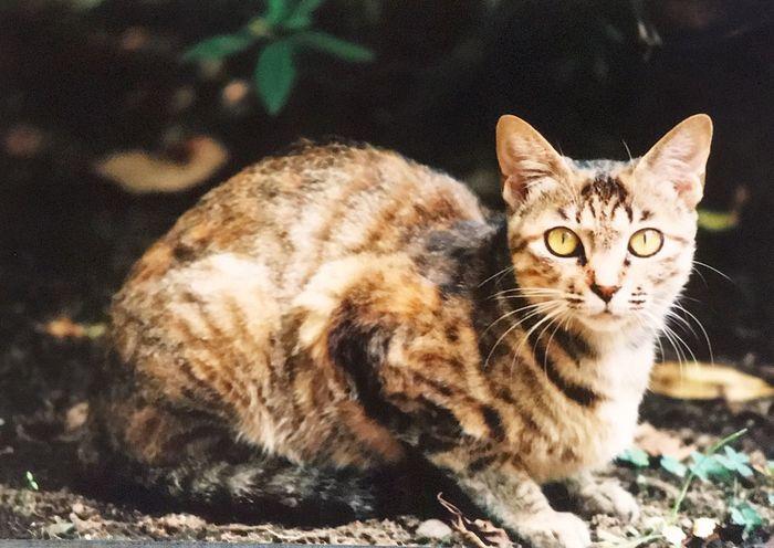EyeEmNewHere One Animal Wildlife Cat Film Photography Film Canont70