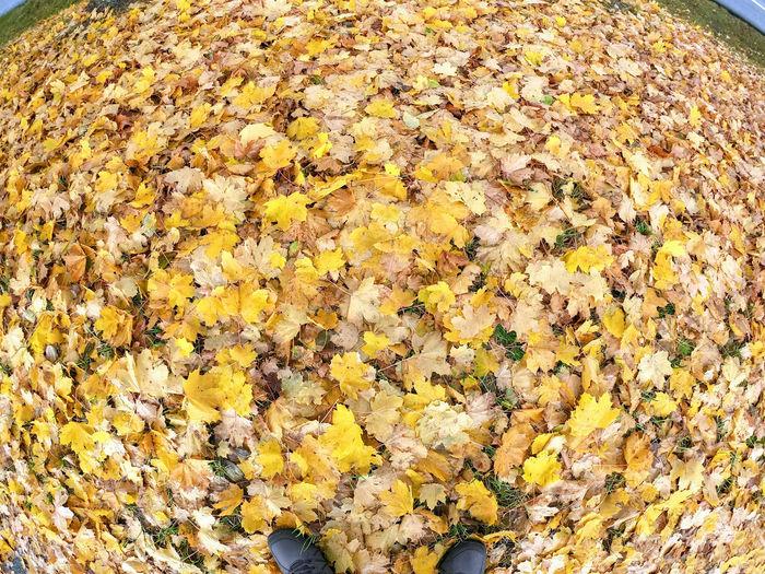 Autumn dry