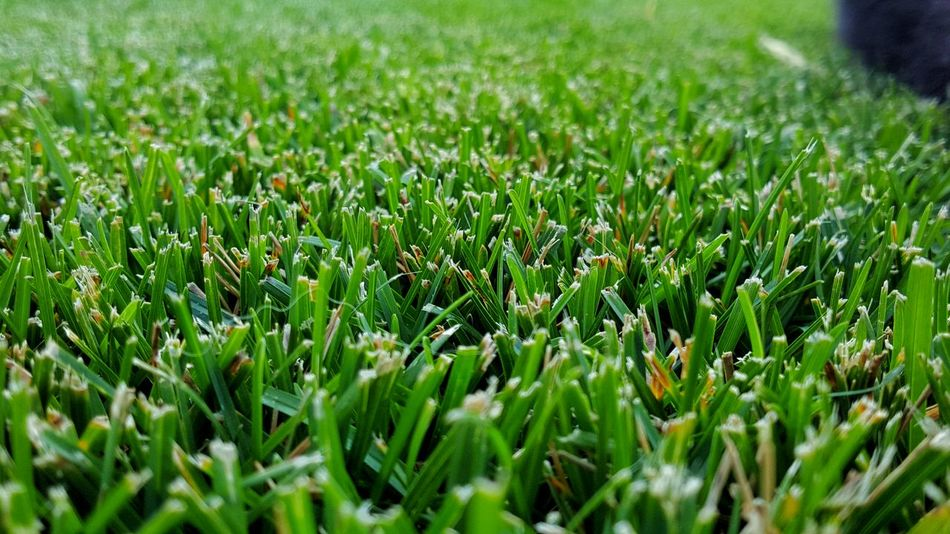 Fresh cut grass. Selective Focus Grass Green Color Freshness Surface Level Close-up Photos Around You No People Beauty In Nature Outdoors Follow4follow Followplease Fountain,Co Followme The Week On EyeEm