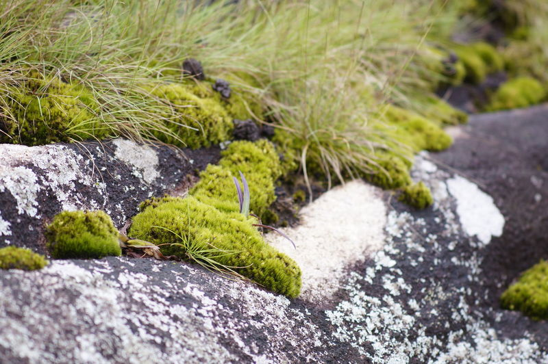 Beauty In Nature Close-up Day Freshness Grass Green Color Growth Moss Nature No People Outdoors Plant Rock - Object Selective Focus Water