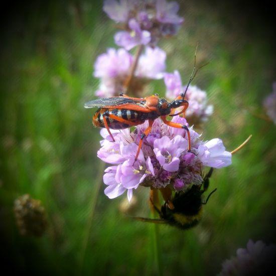 Bug Käfer Wanze Nature Natur