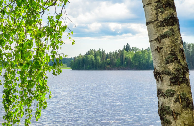 Idyllic lake view with close up from birch tree at spring day in Finland Plant Beauty In Nature Trunk Tree Trunk Water Sky Nature Tranquility Growth Scenics - Nature No People Tranquil Scene Cloud - Sky Green Color Lake Outdoors Idyllic Day Tree Finland Landscape Beauy In Nature Leaves Daylight Bright