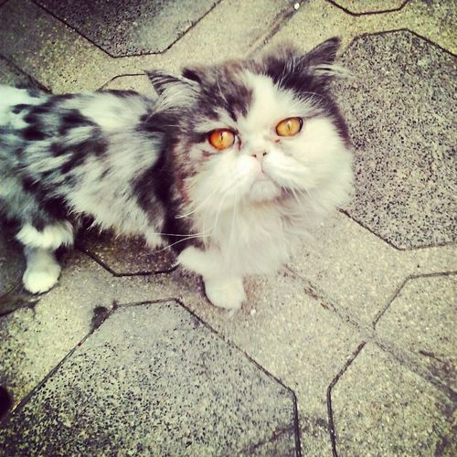 gatito Bello Gato Hi! Bello