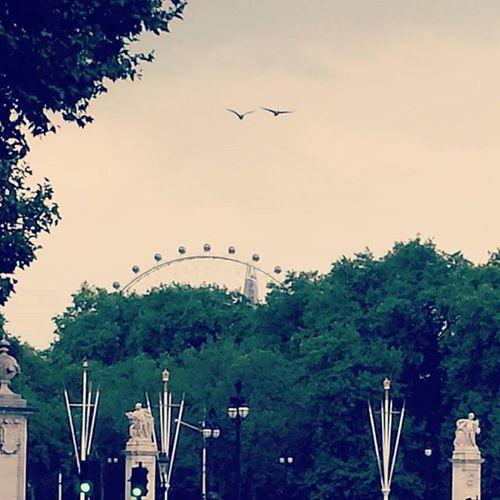 Scorcilondinesi Londra London Londoncity Lovethiscitysomuch LondonEye Photooftheday Picsart Instapic Instaphoto Nicheshoot Follow4follow Like4like Instalike Instacity Artpic Picoftheday Instalondon Londonart Followlondon Photomypassion