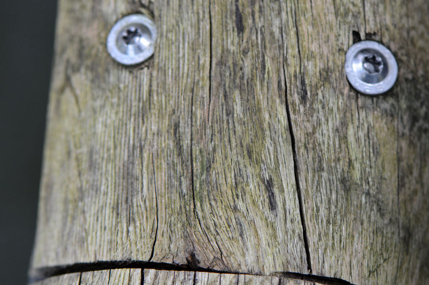 "Sunday series: Faces ""Sceptical"" ... Close-up Wood - Material No People Outdoors Day Simplicity Fragility Macro Detail Wooden Rail Hand Rail Screws Faces Faces Of EyeEm Faces In Places Faces Everywhere Faces In Things Eyes Eyes Everywhere Sceptical Look Doubts What I Do  Collection Taking Photos"