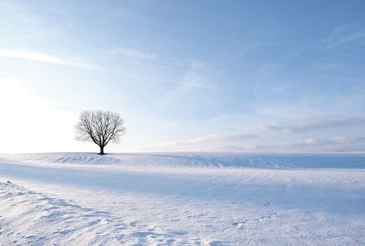 Winter Snow Cold Temperature Landscape Scenics - Nature White Color Land Field Bare Tree Tree
