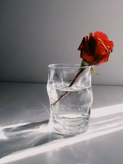 Water Red Indoors  Drinking Glass No People Drink Food And Drink Close-up Freshness Fragility Flower Dissolving Day EyeEm Gallery EyeEm Best Shots Vscobest VSCOPH VSCO Cute Beautiful Flowers Flower Photography Flower_Collection Indoors