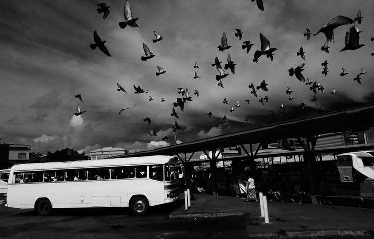 People And Places Transportation Street Photography Streetphotography Black & White Streetphoto_bw Fiji Islands SUVA FIJI ISLANDS The Week On EyeEm Monochrome Photography The Street Photographer - 2017 EyeEm Awards