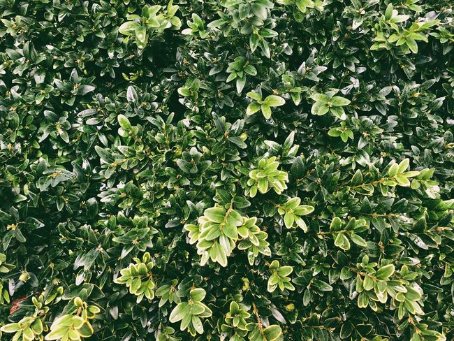Full Frame Leaf Growth Green Color Nature Plant Day Outdoors