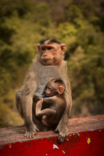 Affection - nothing can replace a mother's love for her child.