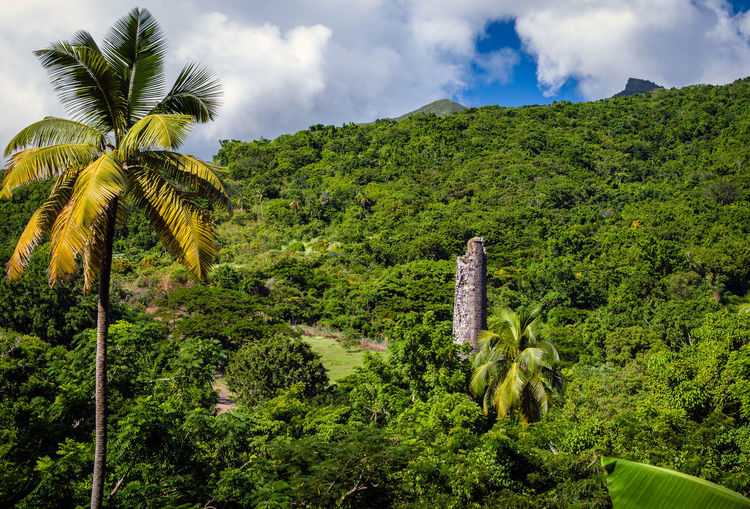 Views of Romney Manor, St. Kitts and Nevis Sugarcane Mill Beauty In Nature Cloud - Sky Coconut Palm Tree Day Environment Foliage Green Color Growth Lush Foliage Mountain Nature No People Non-urban Scene Palm Tree Plant Scenics - Nature Sky Tranquil Scene Tranquility Tree Tropical Climate