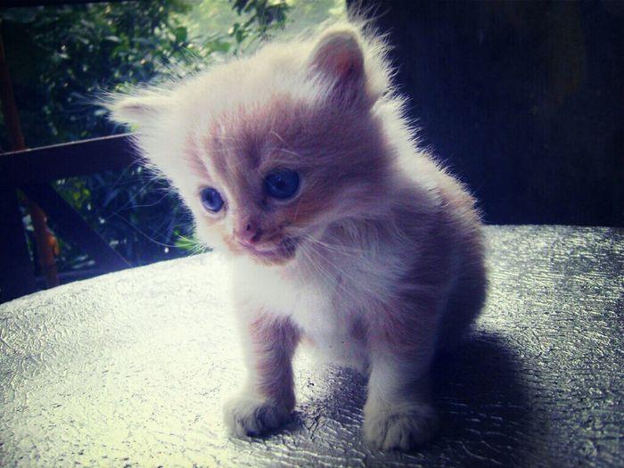 Milo, My Cat
