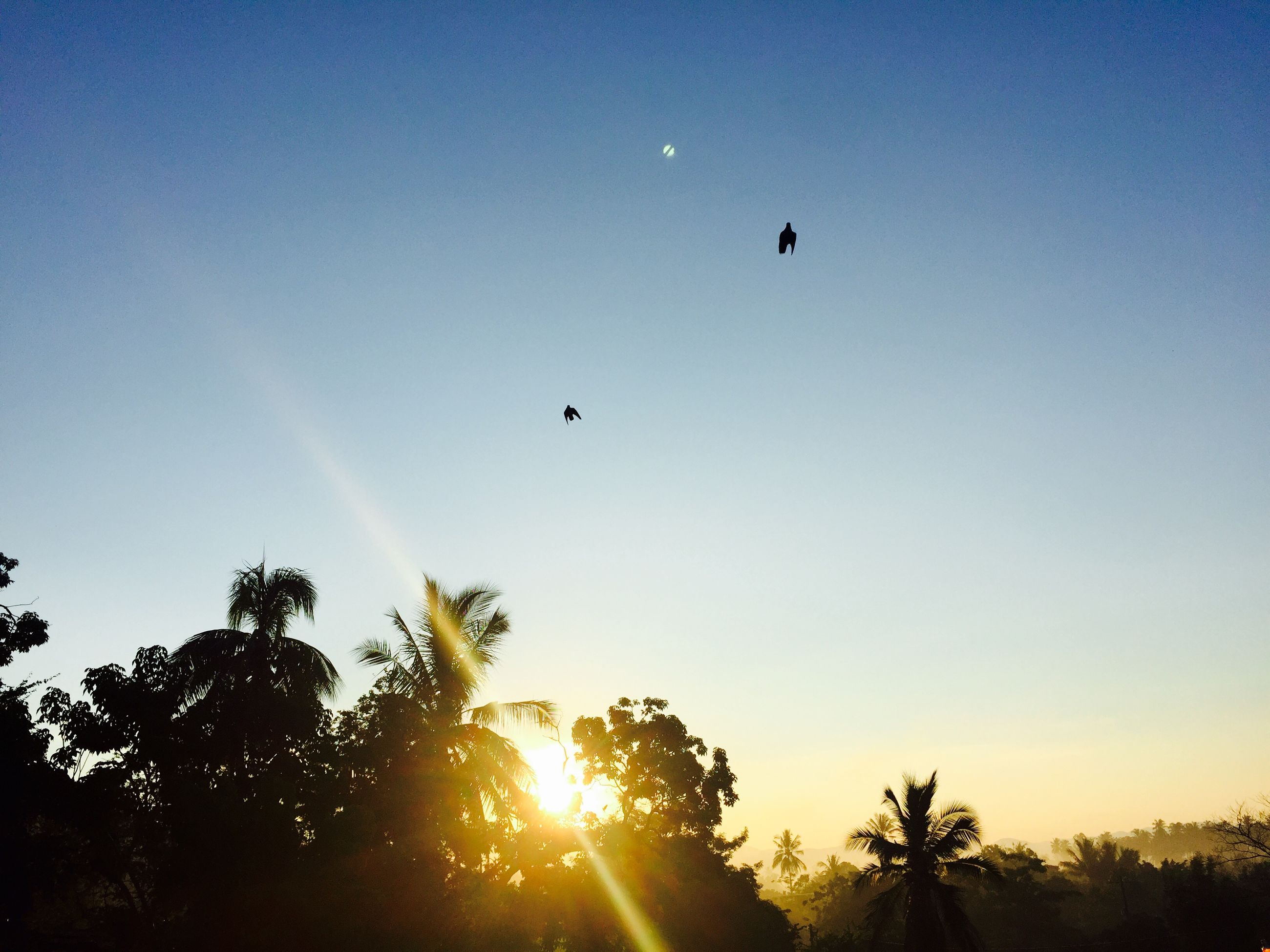 flying, sun, bird, low angle view, mid-air, animal themes, clear sky, silhouette, sunset, animals in the wild, sunbeam, lens flare, sunlight, wildlife, beauty in nature, nature, sky, scenics, copy space, tree
