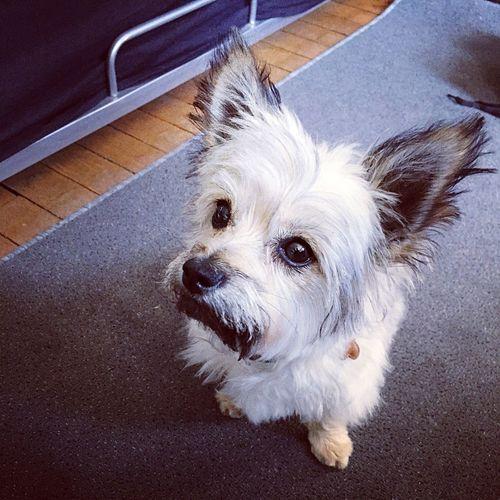 Mon petit chien sort de chez le toiletteur, je devais immortaliser ce petit moment. Dog My Dog Cute Animals