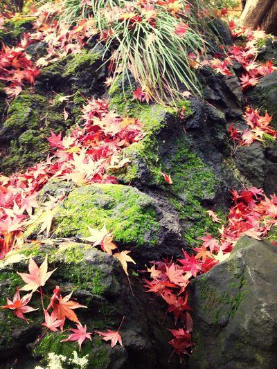 IPhone Japan Autumn Autumn Colors Colorful
