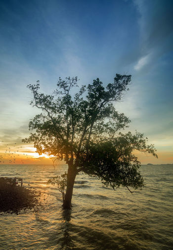Sunset Tree Nature Horizon Over Water Sea No People Beauty In Nature Outdoors Beach Sky Water Landscape Day