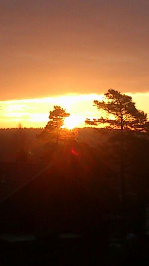 Gorgeous sunrise, view from my balcony at home! Sunrise Silhouette Sun_collection