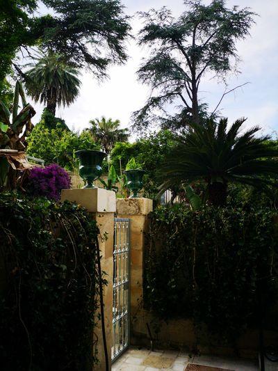 Corti Lecce Salento Italy🇮🇹 Tree Gate Sky