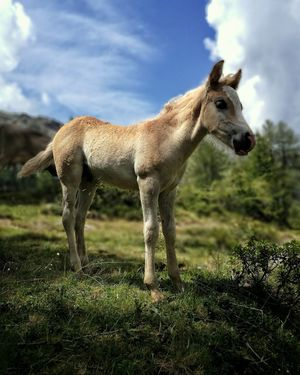 One Animal Animal Wildlife Animals In The Wild Day Animal Themes Grass Cloud - Sky Mammal Sky Nature No People Outdoors Tree Close-up Horse Horses Orobian Alps Beauty In Nature Tranquility Mountain Range Rural Scene Italy Domestic Animals Portrait
