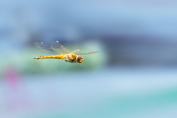Flying Gold