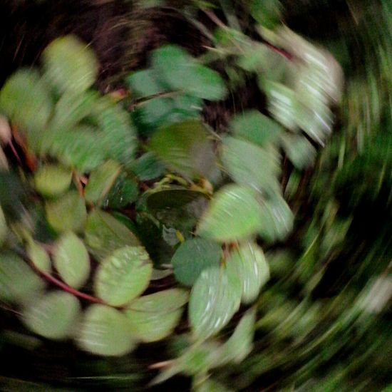 Full Frame Blurred Motion Green Color Selective Focus Growth Nature Green Tranquility Freshness Beauty In Nature Glitch Movement Spin Shot Movement Photography @wolfzuachis Ionitaveronica Wolfzuachis Eyeem Market Green Leaves Plant Nature Spining On Market EyeEm Diversity