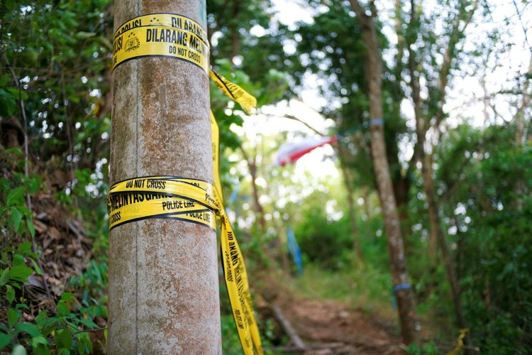 Low angle view of text on tree trunk in forest
