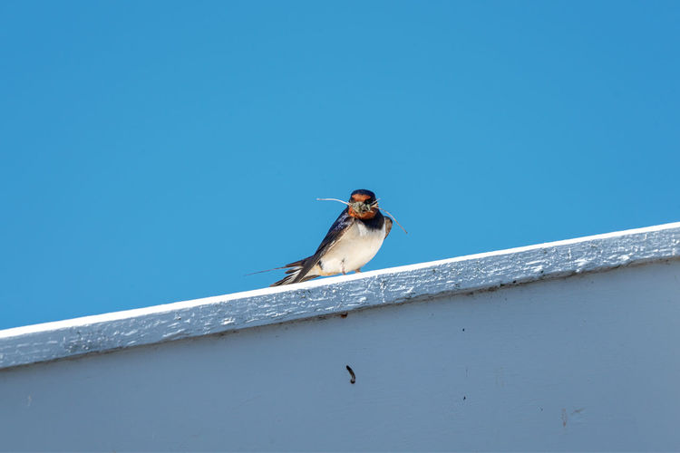 Low angle view of bird perching on blue sky