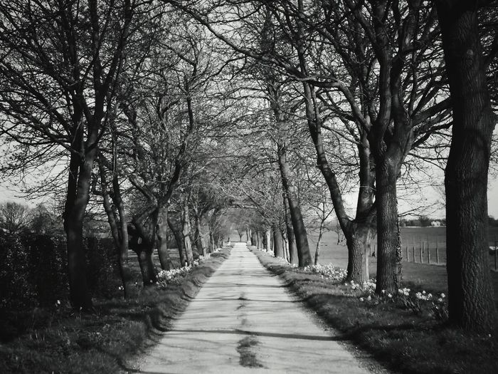 Road to nowhere.... Tree The Way Forward Treelined In A Row Outdoors Nature Beauty In Nature Tranquility No People Day Blackandwhite Blackandwhite Photography Monochrome Monochrome Photography Popular Photos EyeEm Best Shots Nature Photography Nature On Your Doorstep EyeEm Nature Lover