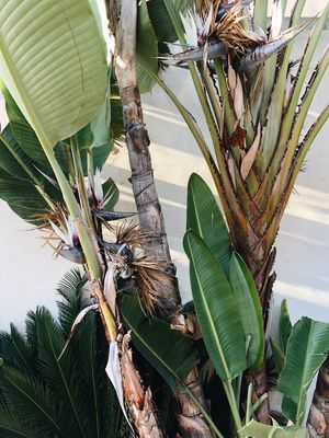 Sun filtering through leaves of tropical plants Tropical Plant Life Plant Sunset Sun Leaf Nature Growth Tree Day No People Plant Banana Tree Palm Tree Outdoors Flower Beauty In Nature Close-up
