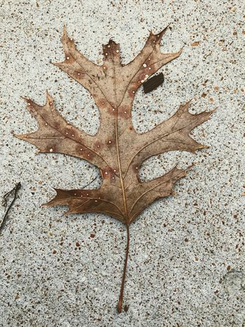 Leaf Brown Copper Colored Nature Ground