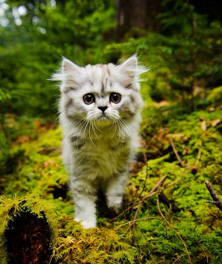 Portrait of kitten standing on ground