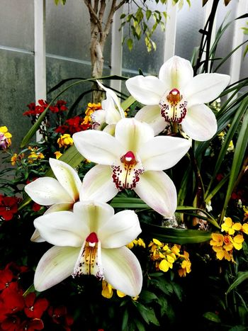White Flowers. Flower Plant Growth Nature No People Flower Head Day Beauty In Nature Fragility Freshness Petal Beauty In Nature Growth Nature Close-up Greenhouse