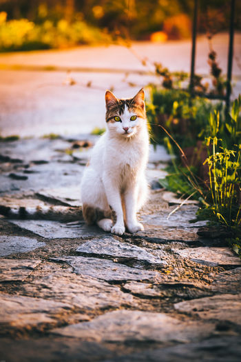 Portrait of cat on cobblestone