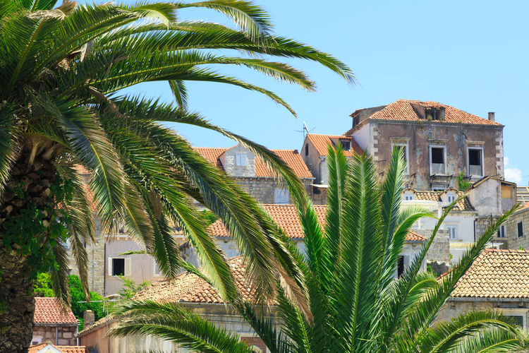 Palm trees by houses against sky