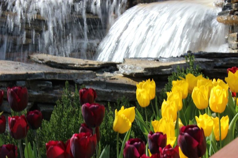 Tulips🌷 Tulips Rainbow Relaxing Taking Photos Hanging Out Weekend Enjoying Life Istanbul Turkey Lale Zamani