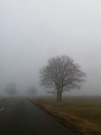 Foggy day. ...