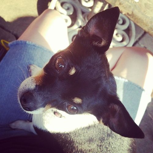 Missgracie Goosiegracie Dogsofinstagram
