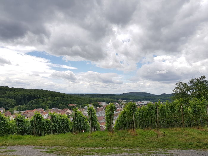 Landscape Wineyard Cityview Cityscape Beauty In Nature Scenics Maulbronn Rural Scene Outdoors Growth Focus On Foreground On Tour Personal Perspective Things Around Me On Tour With My Handy Card Design Art Is Everywhere Details Of My Life Art Photography Green Color Green Sky And Clouds Summer Plants Nature