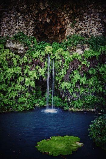 Water Tree Green Color Plant Waterfall Flowing Water Stream - Flowing Water Power In Nature Splashing Rapid