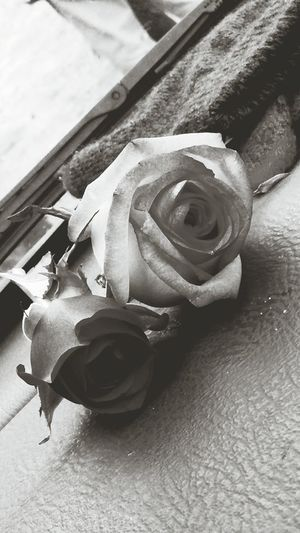Roses from mother in law memorial. Roses🌹 Flowers For Rosa Black & White Much Love❤