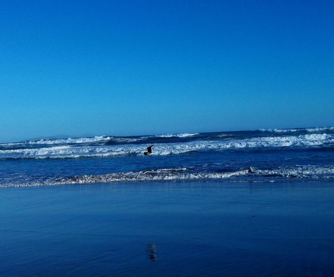 Blue Sea Water Clear Sky Horizon Over Water Bird Photography Summer Beach Canon Beautiful View Beautiful Day Beautiful Nature Natures Diversities Eyeemphoto Mobile South Africa Canonphotography Photography Nikonphotography Nikon From My Doorstep Enjoying Life Hello World Check This Out Taking Photos