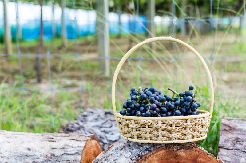 Grapes in wicker basket on log