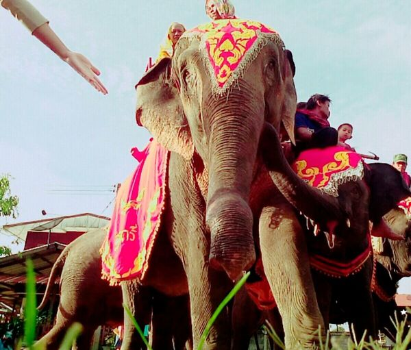 Would you like to hold my hand! Elephant Thai Buddha Days Holdmyhand