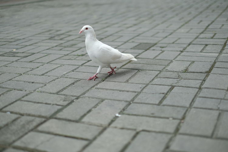Seagull perching on footpath