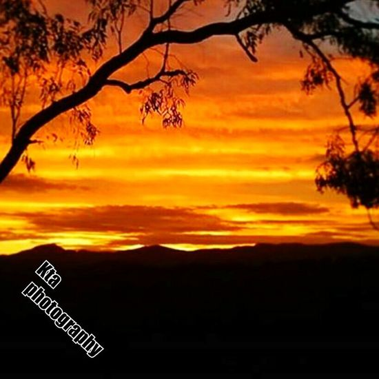 Paint The Town Yellow Sunset Tree Scenics Nature Silhouette Guidance No People Tranquility Communication Landscape Sunlight Outdoors Beauty In Nature Travel Destinations Road Sign Rural Scene Sky Day