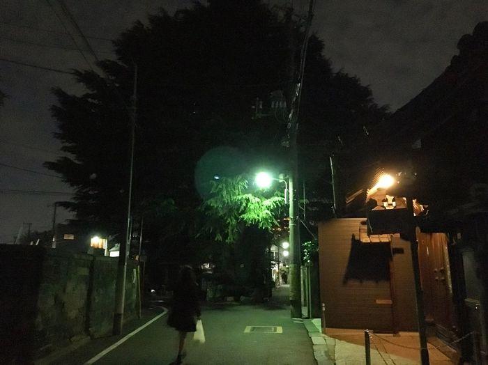 Night Tree City
